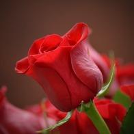 flower-3115353_640
