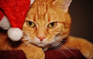 cat-1898637_640